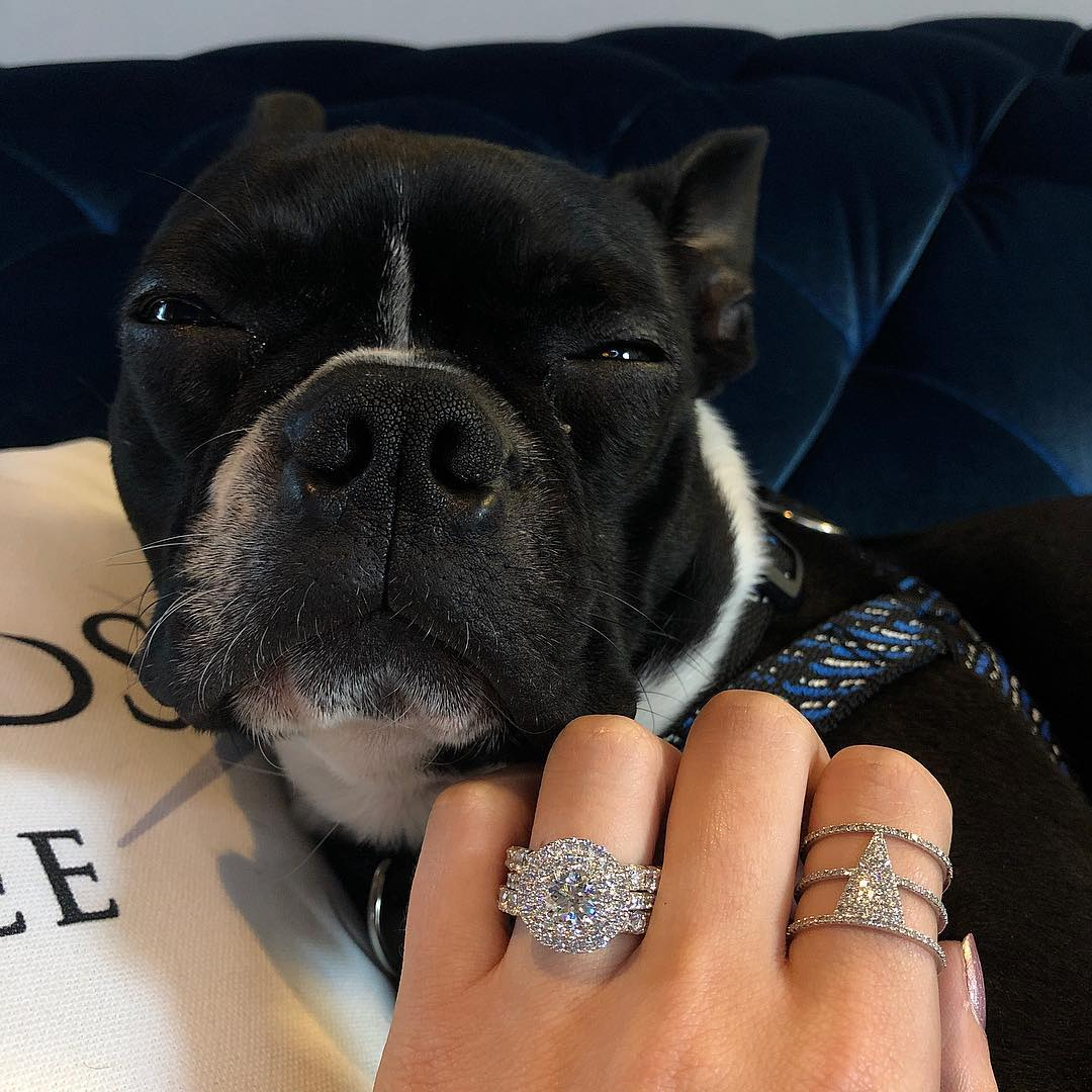 Photograph of a dog with an engagement wedding ring
